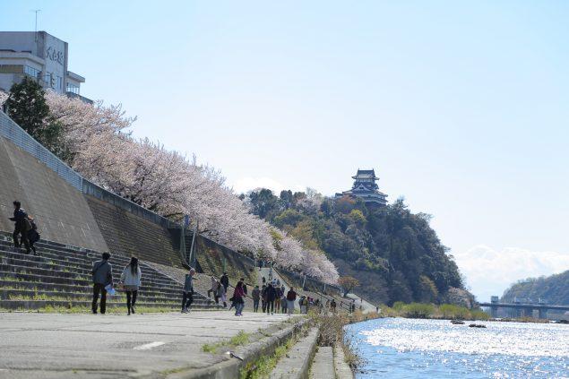 木曽川沿いの桜並木と犬山城
